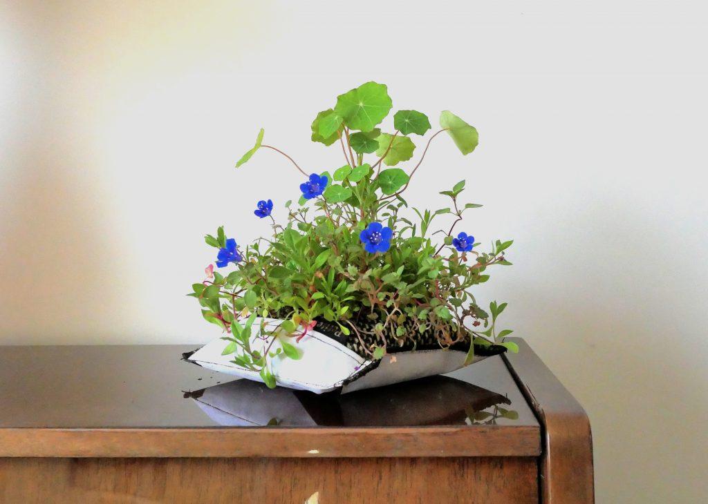 petite nature petite bleu