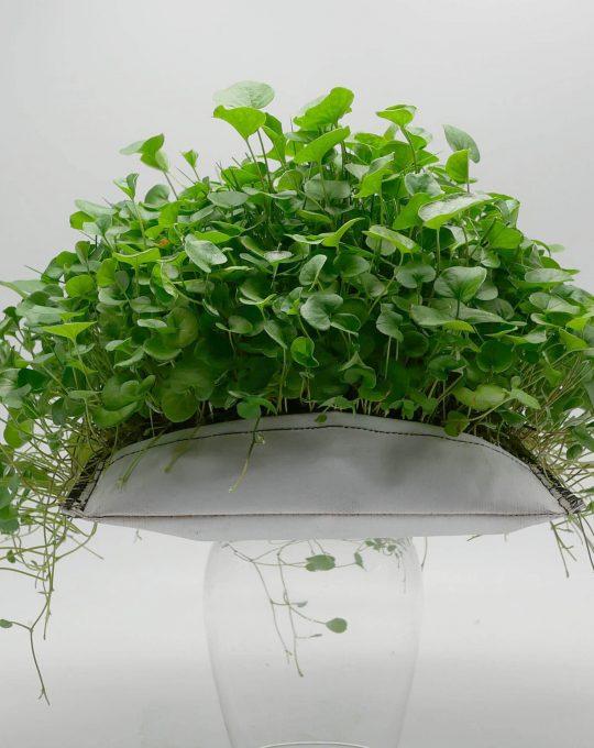 La petite verte photo produit